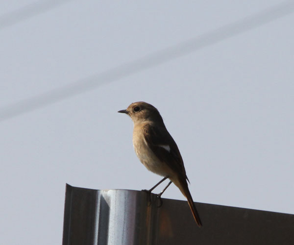 7D300鳥IMG_9023.jpg