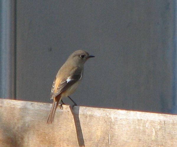 S2IS鳥IMG_3283.jpg